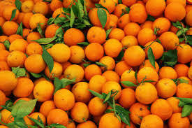 Wholesale Citrus Fruit: Fresh Oranges
