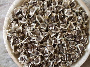 Wholesale Vegetable Seeds: Moringa Seed