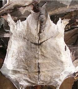 Wholesale crocodile hides: Donkey Hides