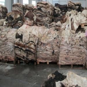 Wholesale salted hides: Salted Cow Head Skin /Available Wet Salted Donkey Hides/ Cow Hides/Sheep