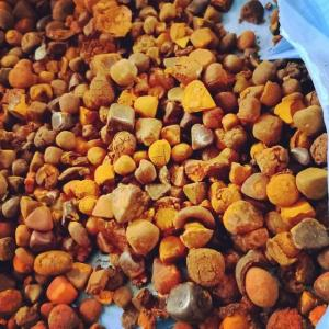 Wholesale ox gallstone: Buy Cow Gall Stones / Ox Gallstones for Sale