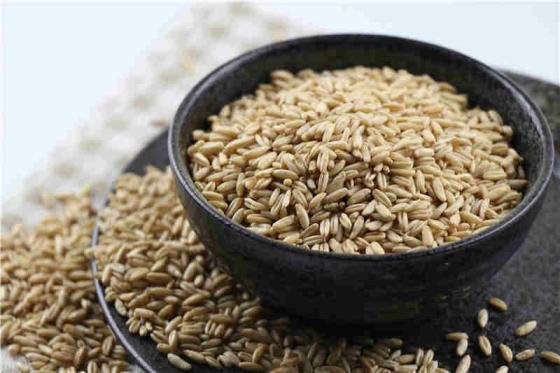 A Grade Top Quality Hulled Oats/ Oats Grains
