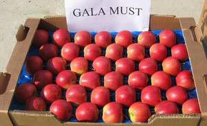 Wholesale Apples: Fresh Red Gala Apples