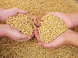 Wholesale white corn: Soybean