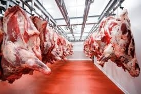 Wholesale beef pizzle: Whole Frozen Halal Pork Meat and Pork Feet and Parts