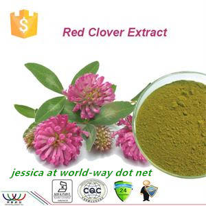 Wholesale red clover: Red Clover Extract
