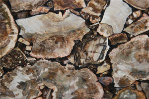 Wholesale Countertops, Vanity Tops & Table Tops: Marble Petrified Wood Stone Vanity Top