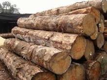 Wholesale buy: Buy Iroko Wood Logs/ Sawn Timber At the Most Competitive Price
