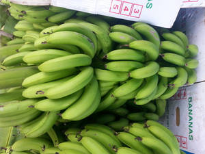 Wholesale Fruit: Fresh Banana