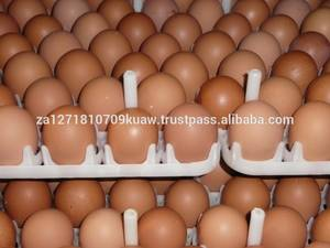 Wholesale Eggs: Fresh Table Eggs and Day Old Chicks Available
