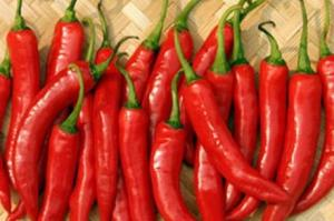 Wholesale hot chilli: Vietnam Hot Fresh Chilli