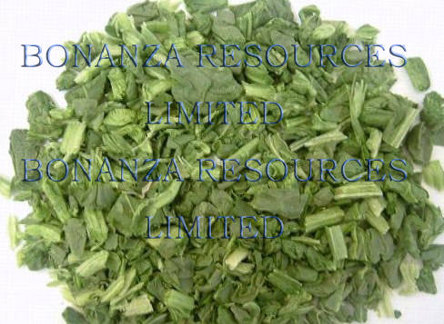 dried vegetable: Sell A grade freeze dried spinach Lyophilized instant vegetable