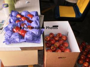 Wholesale plastic label: Fresh Fruit- Apples, Oranges, Lemons, Pears