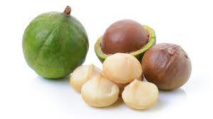 Wholesale Macadamia Nuts: High Quality Queensland Nut