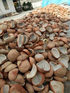 Wholesale Coconuts: Coconut White Copra Dried Indonesia Origin