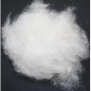 Wholesale raw cotton: Kapok Fiber (Raw Cotton) for Bedding & Pillow