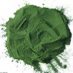 Wholesale food: Chlorella Powder 100% Pure and Natural Food Grade Spirulina Powder/Chlorella Powder