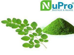 Wholesale moringa powder: 100% Natural Moringa Oleifera Leaf Extract Powder