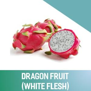 Wholesale dragon fruit: Fresh Dragon Fruit (White and Red Flesh) 100% Vietnam Origin