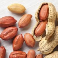 Raw Peanut / Raw Groundnuts / Raw Peanuts in Shell / White and Red Peanut