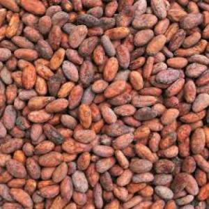 Wholesale Cocoa Beans: Organic Cocoa Beans for Sale