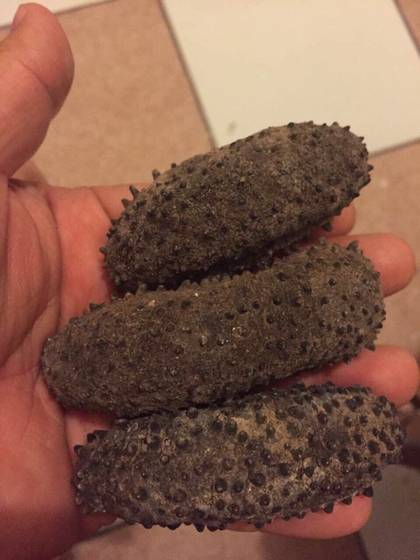 Sell Dried Sea Cucumber