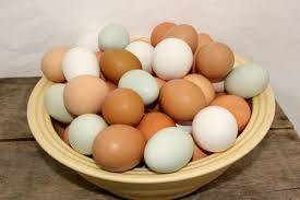 table: Sell Chicken Eggs for Hatching/Table Broiler/Ross