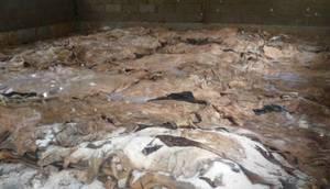 Wholesale salted donkey hides: Wet Salted Donkey Hides