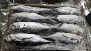 Wholesale Fish: Frozen Horse Mackerel Fish