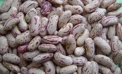 Wholesale lighting: Light Speckled Kidney Beans