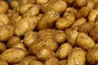 Fresh Potatoes for Sale / Fresh Irish Potatoes