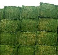 Sell Alfalfa HAY Green and Fresh - Best Quality and Price