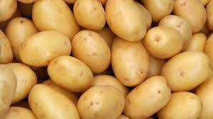 Wholesale Fresh Potatoes: Holland Sweet Potato,Fresh Potatoes for Sale.