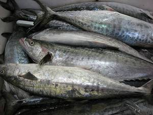 Wholesale alaska pollack: Frozen Salmon Fish, Atlantic Frozen Salmon /Horse Mackerel Fish