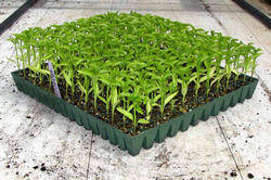 Wholesale seeding nursery: Nursery Seedling Trays
