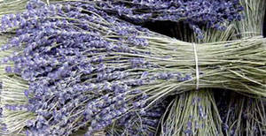 Wholesale Other Fresh Cut Flowers: Lavender Bouquets,lavender flowers,lavender sachets,lavender oil,tea