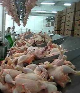 Wholesale halal chicken: Halal Frozen Chicken Quarter Legs / Whole / Breast / Drum Sticks