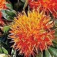 Wholesale curcumins good price: Safflower Yellow , Carthamus Yellow