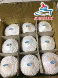 Wholesale Coconuts: Fresh Young Coconut