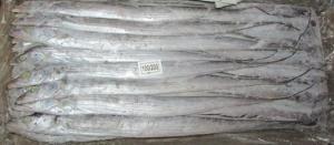 Wholesale ribbon fish: Frozen Ribbon Fish