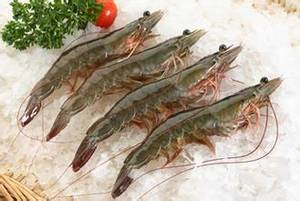 Wholesale growth promoter: Growth Promoter for Shrimp