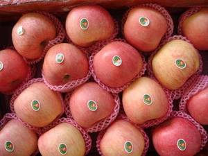 Wholesale red fuji apple: Apple