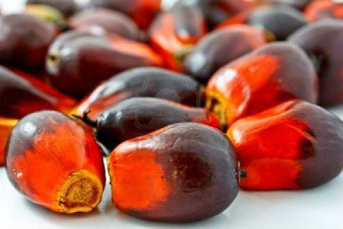 Sell High Quality Crude Palm Oil