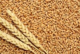 Wholesale wheat grain: High Quality Grade Spring and Winter Wheat Grains
