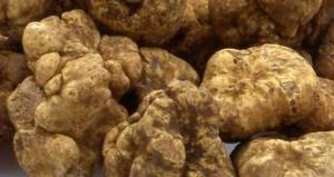 Wholesale mushroom & truffles: Fresh Natural Truffles