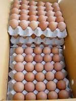 Sell Fresh Brown/White Chicken Eggs for sale