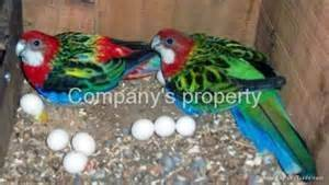 Wholesale fertilizers: Fertile Parrot Eggs