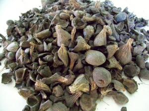 Wholesale kernels: Palm Kernel Shell