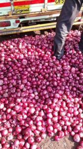 Wholesale Fresh Onions: White and Red Onoins