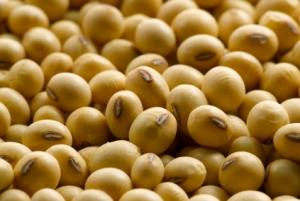 Wholesale soybean fiber: Top Quality Non GMO and GMO Soybean